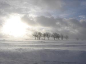snow storm-2-1406809