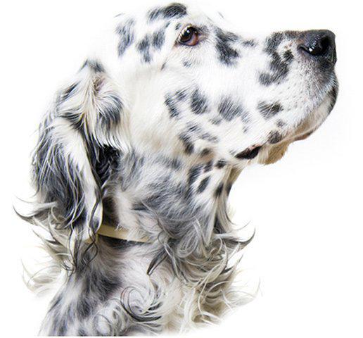 Ga Pet Food Partners Dog Food