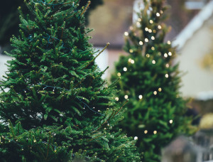 christmas-tree-1149919_1920